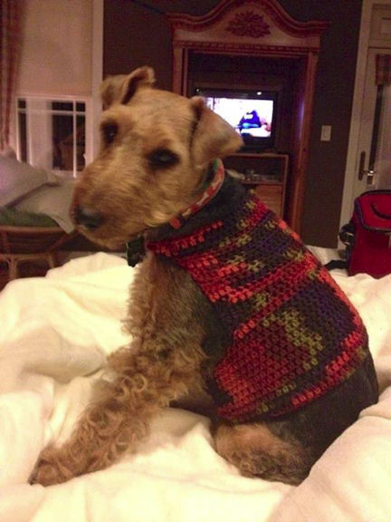 Free Dog Sweater Crochet Pattern