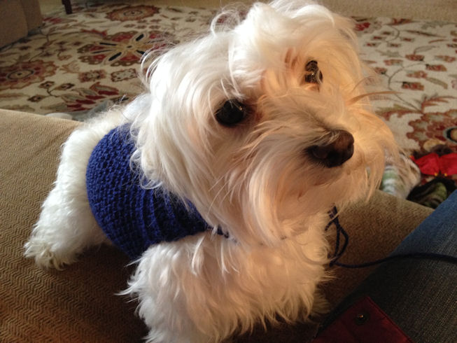 Free Crochet Dog Sweater Pattern
