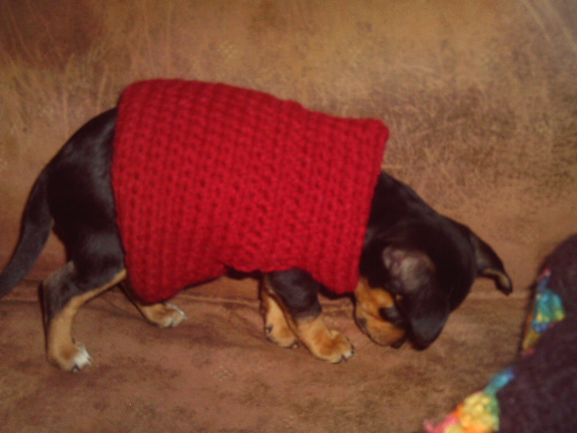 Dog Sweater Free Crochet Pattern Courtesy of Crochet N More