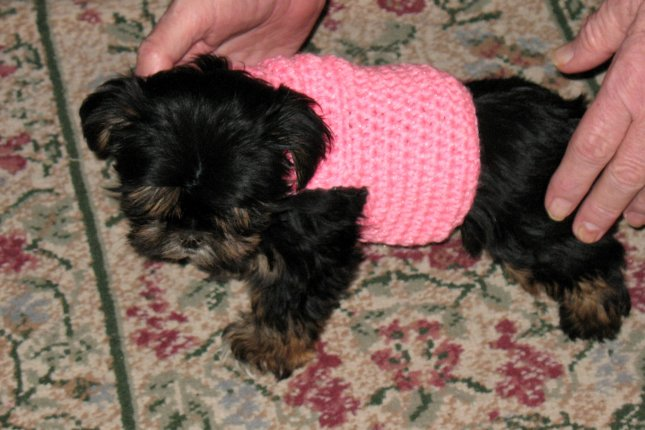 Free Dog Sweater Crochet Pattern at Crochet N More